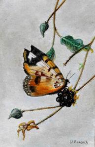 dierenportret, dierenschilderij, olieverf, Kromme Gevel, vlinder